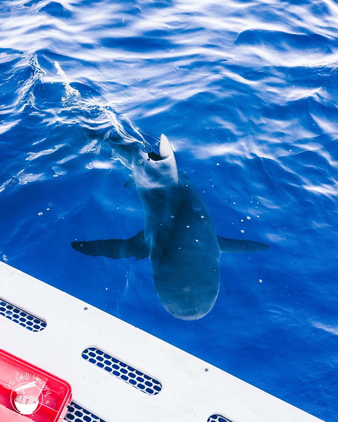 North Shore Shark Adventures Hawaii